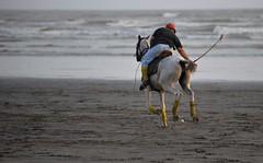 (OamateurS) Tags: horses beach nature polo nikon80200f28 nikond700