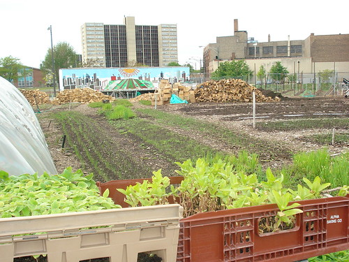 06-City-Farm-Chicago-IL by Piush Dahal, on Flickr