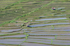 Paddies - Bali (MartinePasquini) Tags: bali water indonesia asia rice paddy terrace terraces agriculture primary cultivation paddies cultivate