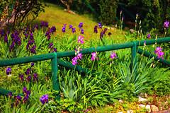 recinto-confiori (fatboypellegrini by Raphy) Tags: flowers trees fiori sentiero bosco balconi edere
