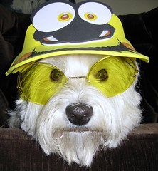 """""""Do you recognize me?""""  ~ 21/52 (ellenc995) Tags: friends hat yellow riley glasses westie westhighlandwhiteterrier fff incognito pet500 pet100 concordians platinumheartaward rubyphotographer 100commentgroup memorycornerportraits 52weeksfordogs"""