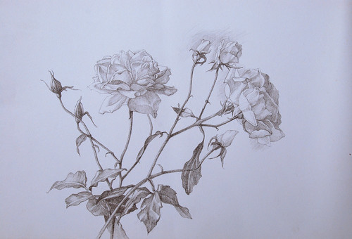 Graphite drawing of roses