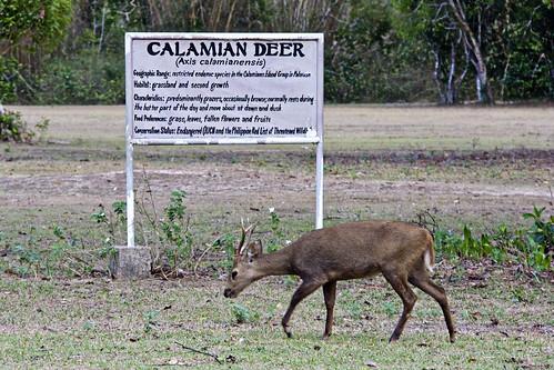 Calamin Dear