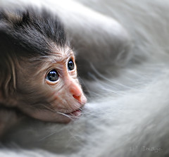 Bali - Monkey Forest - My baby