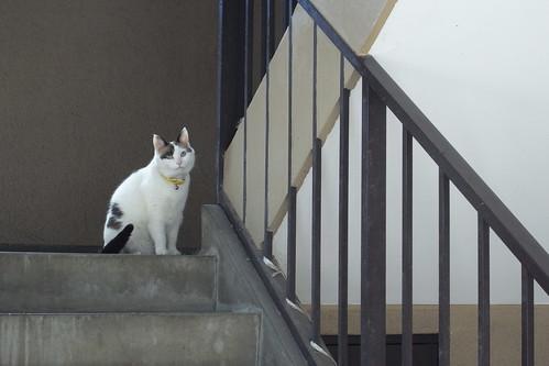 Today's Cat@2010-06-01