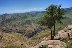Chehlmir -Tandooreh park/ -   (P A H L A V A N) Tags: park photo persian iran persia iranian pars  sina  irani farsi melat  fars parsi daregaz   kazem  dargaz   pahlavan