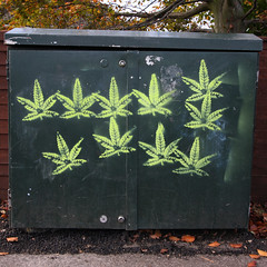 leaves (Leo Reynolds) Tags: canon eos leaf stencil iso400 f80 22mm stencilnorwich 0008sec 40d hpexif groupstencil xleol30x xxx2010xxx