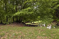 Camposecco_MG_8684 (candido33) Tags: roma alberi natura lazio appennino bosco doline faggi montisimbruini carsismo cameratanuova camposecco parconaturaledeimontisimbruini faggete altopianodicamposecco