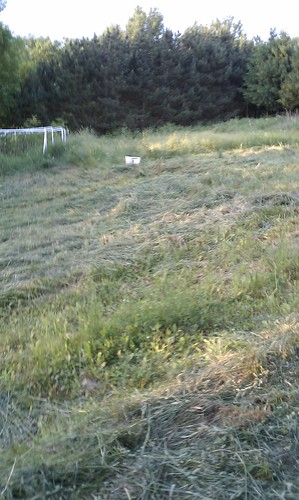 Field by blueberries after mowing