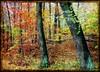 Come with me.... (Tobi_2008) Tags: autumn trees sun color detail nature alberi forest germany deutschland saxony herbst natur arbres sachsen tobi sonne wald farbe bäume allemagne germania gegenlicht fineartphotos colorphotoaward diamondclassphotographer flickrdiamond platinumheartaward vanagram
