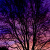 CI076 Sunrise (listentoreason) Tags: sky plant color tree nature purple scenic favorites sunsetsunrise ef28135mmf3556isusm score40