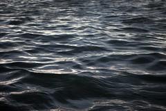 The water (Kris Krug) Tags: ted gulfofmexico slick gulf pollution oil environment bp spill oilslick oilspill gulfcoast britishpetroleum tedx oilspew oilspillbp tedxoilspill birdpe