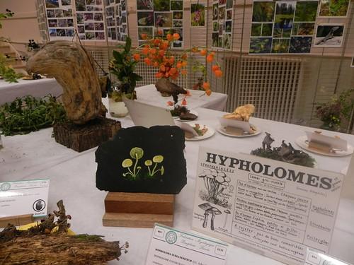 40 Les hypholomes par Jacqueline Sudjovic