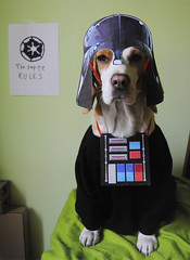 Yo pleaz join the Dark Side (Vanilla Monkey Bear) Tags: dog beagle halloween awesome empire pup darkside darthhoney