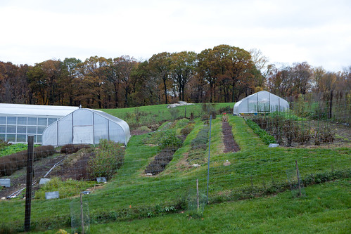 Greenhouse area