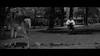 Nara Park, Japan (emrecift) Tags: candid portrait street park nature deer japan analog 35mm film photography bw monochrome cinematic grain 2391 anamorphic crop canon ae1 program new fd 50mm f14 kodak tmax 100 ilfosol 3 114 emrecift filmdev:recipe=11479 kodaktmax100 ilfordilfosol3 film:brand=kodak film:name=kodaktmax100 film:iso=100 developer:brand=ilford developer:name=ilfordilfosol3