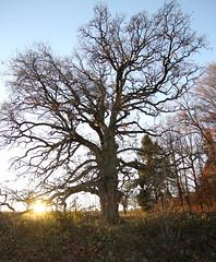 Older than... (L.H. Fotografie) Tags: baum eiche gros alt äste sulzeiche big tree old nature natur