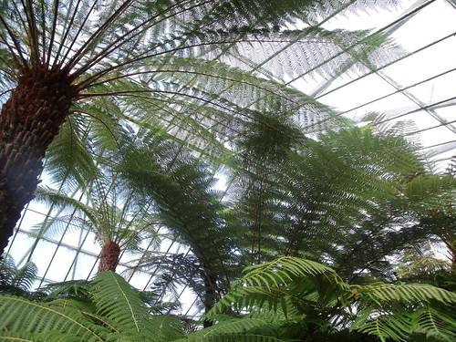 20090919 Edinburgh 20 Royal Botanic Garden 163
