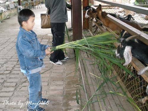 2009 12 20_12可達羊場.JPG