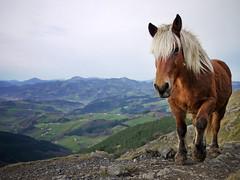 txindokiruntz (mikelo) Tags: horse caballo camino path stock getty gettyimages yegua bidea zaldia gf1 pottoka txindoki behorra gettyimagesspainq1
