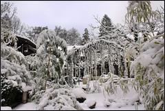 Winter (cockie1408) Tags: schnee winter nature night canon eos switzerland town berge zrich kalt oben blick stille ruhe heizen waid 450d herab tessingrotto
