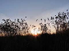 """Tramonto a su """"Staini Saliu"""" (RoLiXiA) Tags: sardegna sunset sky sun tramonto sardinia cielo sole sardaigne ecologia stagno giunco serdiana zoneumide stainisaliu panasonicdmcfz28"""