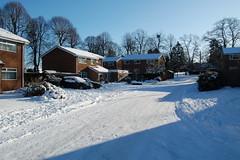Snow January 2010 114