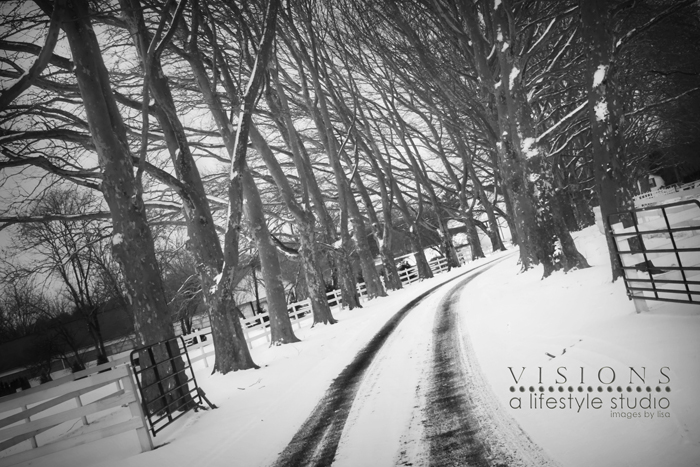 Winter Wonderland BW 2 WM