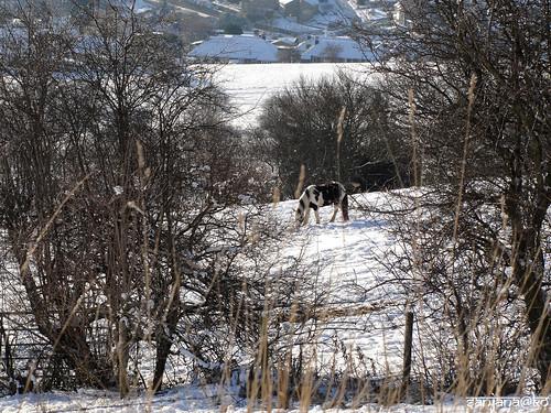 Snowy Huddersfield 10
