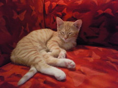Baby Anton (nemo & anton) Tags: anton katze kater wg kleiner kleine pelz