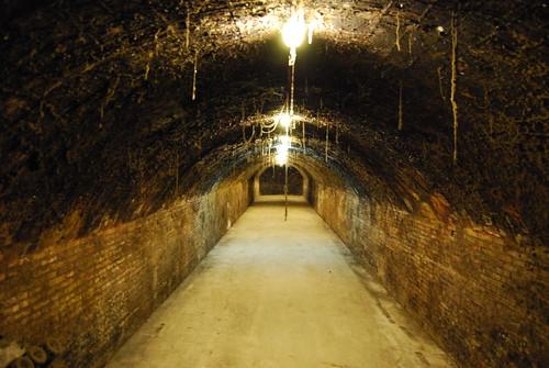 Cava cellar