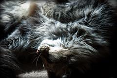 Kitty Pile (RLHyde) Tags: cats cat hair fur furry nikon sb600 kitty whiskers pile kitties nikond40