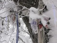 20100116 hiieniinepuu (vaula) Tags: winter snow nationalpark estonia sacred sacredplace lumi talvi votive eesti kansallispuisto lahemaa sacredtree viro hiisi hiieniinepuu pyhpuu