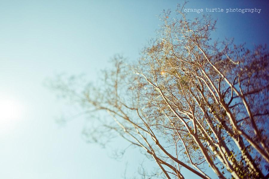 ts-trees-102