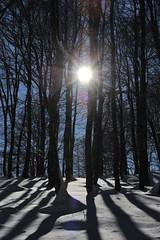Faggeta in controluce (Gizzy28) Tags: winter snow alberi neve inverno paesaggio controluce molise blueribbonwinner faggi parconazionaledabruzzo vallefiorita platinumheartaward vanagram flickraward superstarthebest bestcapturesaoi passiondclic