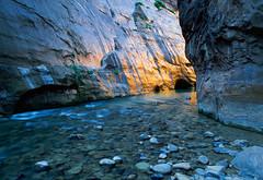 Canyon of Golden Light (David Shield Photography) Tags: color water sunrise river gold utah hiking canyon trail velvia zionnationalpark southernutah fujichrome narrows virginriver coth flickraward naturesgreenpeace