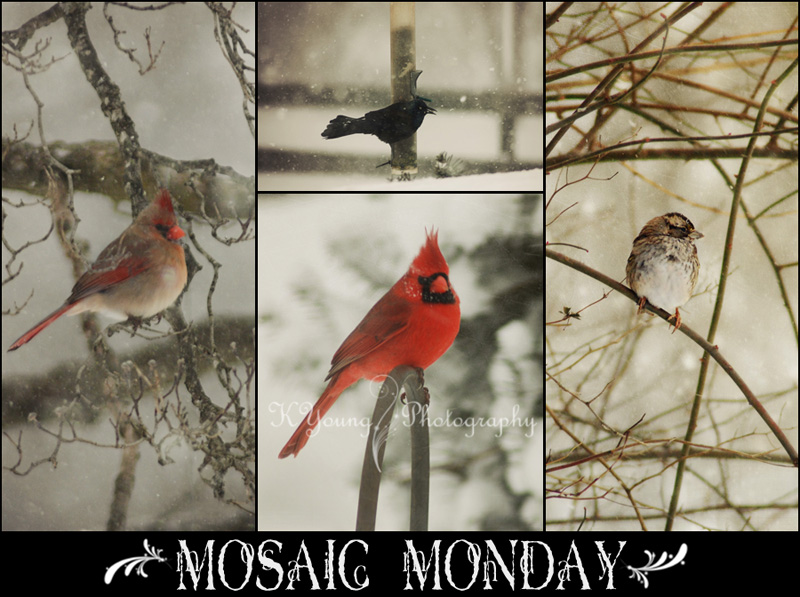 Mosaic Monday: Birds in snow