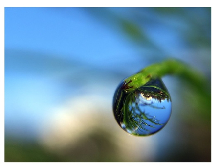 _dewdrop
