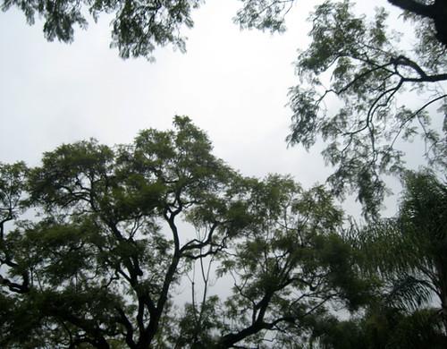 rainy day trees