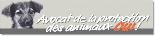 Un avocat pour les animaux