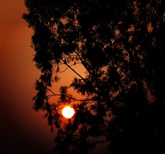 A Saffron Evening (legends2k) Tags: sun tree nature lumix evening twilight woods panasonic g1 hyderabad saffron henrydavidthoreau suriya fourthirds microfourthirds panasoniclumixdmcg1