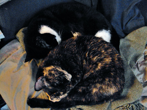 Double Kitty Curl