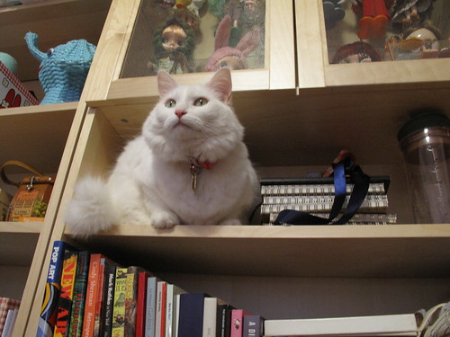 Nilla climbed into the bookcase!