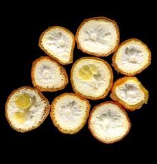 24542 Citrus x tangelo (horticultural art) Tags: fruit getty citrus horticulture honeybell citrusxtangelo horticulturalart 136633608