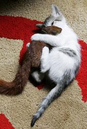 Cat and squirrel (2)