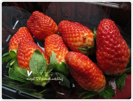 關西採草莓橘子牛欄河2010.02.20-4