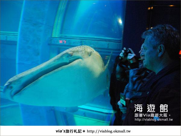 【via關西冬遊記】世界最大極的水族館~大阪海遊館18
