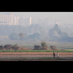bangalore (sash/ slash) Tags: city travel farmers bangalore vegetable sash agriculture brinjal bt cultivation sajesh