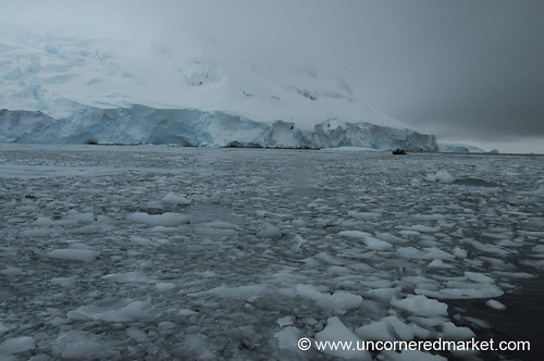 Ice Floes Along Hanusse Bay, Antarctica