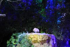 030310 - day 3 - night safari singapore zoo (69) (nate.cho) Tags: zoo singapore singaporezoo nightsafari